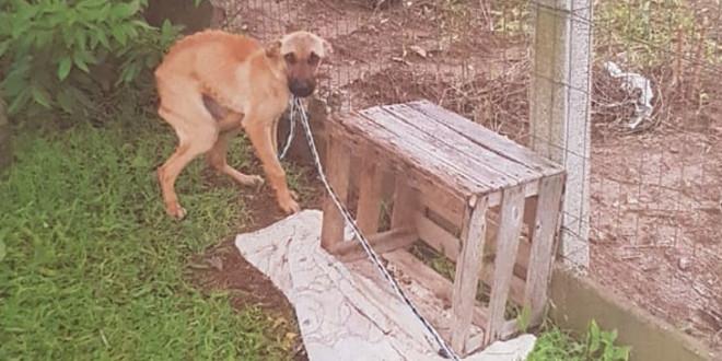 POLICIAL - Cachorros 01 A NET