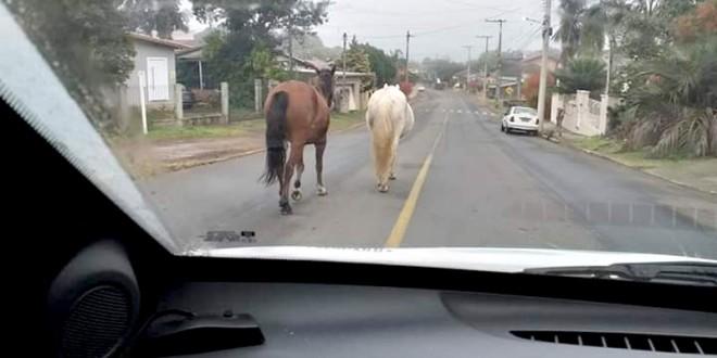 MISTUR - Cavalos Soltos na Rua 01