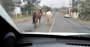 POLICIAL - Cavalos 01